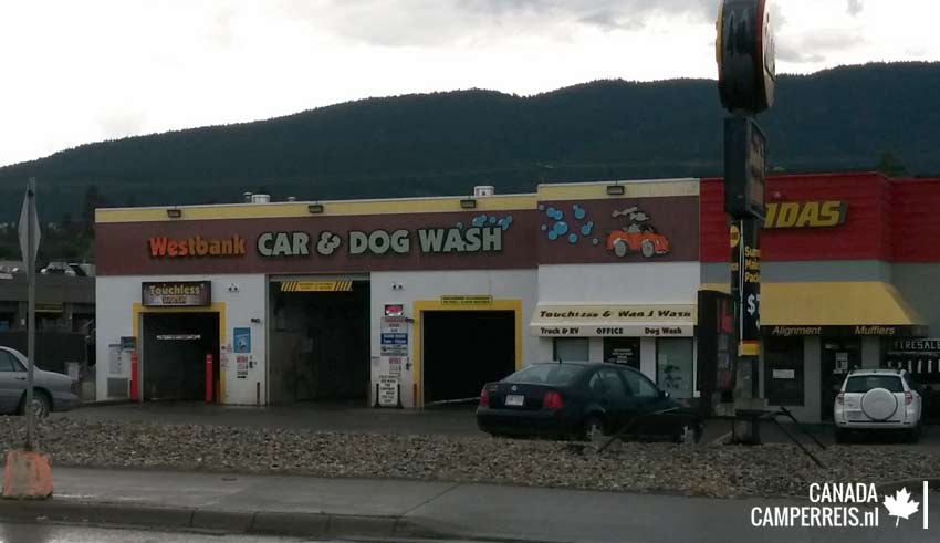 Car and dog wash