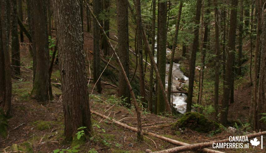 Inspiration Woods Revelstoke Canada