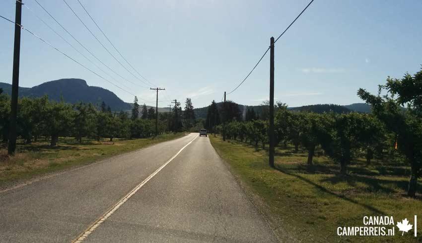 Kelowna wijngaarden