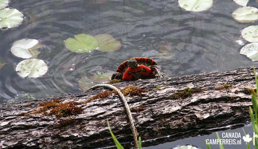Turtle Dutch Lake