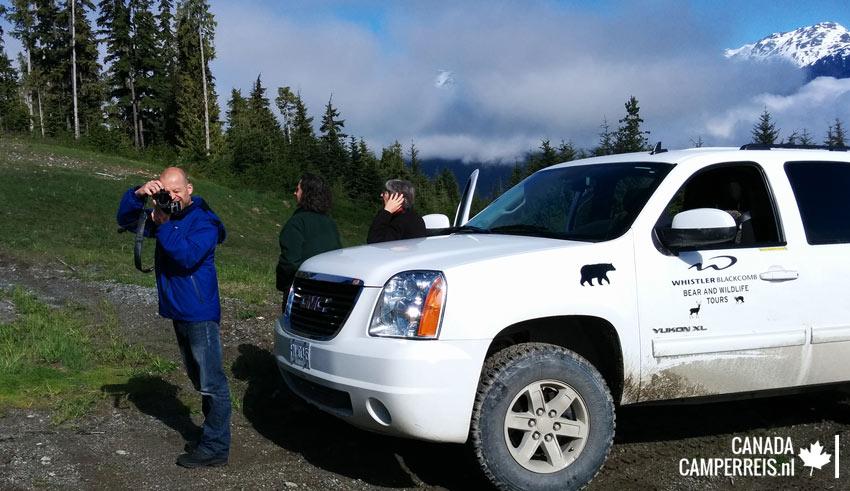Bear tour in Whistler